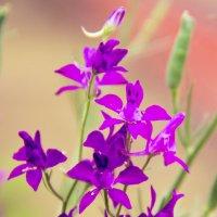Цветы :: Ольга Семенова