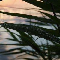 Вечер у реки :: Виктория Мацук