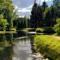 Солнечное озеро :: Наталья Zima