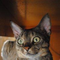 Cat :: Аня Каракулова
