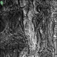 Такие разные деревья :: Михаил Розенберг