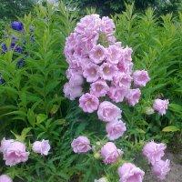 цветы,цветы... :: Галина R...