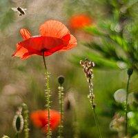 Полет пчелы :: Александр Русанюк