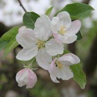 Чарівна весна :: Яна Чекаленко