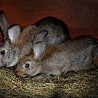 кролики :: Olga Zhukova