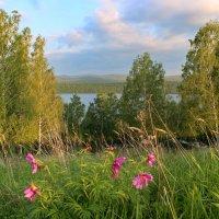 Сибирское лето!!! :: Наталья Юрова