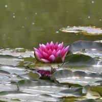 Есть в графском парке черный пруд, там лилии цветут.... :: МарШева ♥Just Mary♥ .