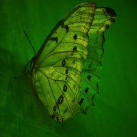 Бабочки :: Алина Леликова