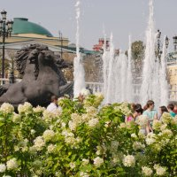 Парк на Манежной. :: Виктор Евстратов