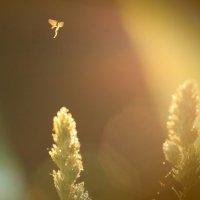 Час ангела :: Михаил