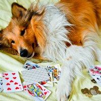 Да ну эти азартные игры! :: Nikki