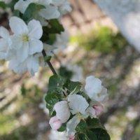 Весна :: Света Чубук