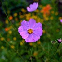 Цветы весёлые. :: Анатолий