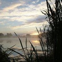 Утро на болоте :: василий