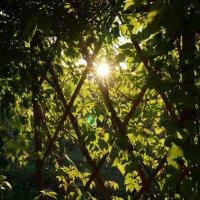 Лучик солнышка :: Ксения Лебедева