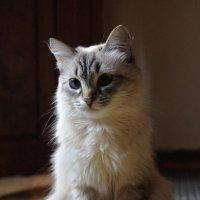 Умка-кошка :: Алексей Масалов