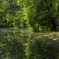 У озера... :: Liliya Семенова (slastena2051)