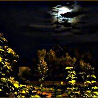Ночная картинка :: vladost2010(Владимир) Постоев