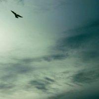 Парящая в грозном небе :: Наталья Нарсеева