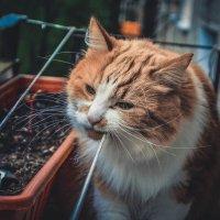 Котик :: Алёнка Шапран