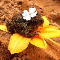 Царевна лягушка . :: Hаталья Беклова