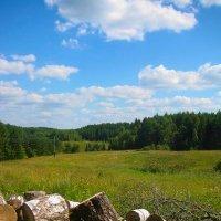 Из жизни деревьев :: Вита Чернышева (CheVita)