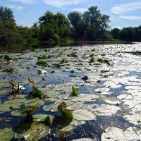 серебряная река :: Валерия Шамсутдинова