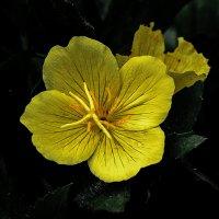 На даче (жёлтый цветок). :: Sergey Serebrykov