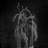 Натюрморт со злаками чб :: Игорь Чубаров