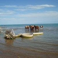 Кони на водопое :: Вера Кот-Оглы