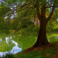 В королевском парке г. Казерта :: Лариса Евдокимова