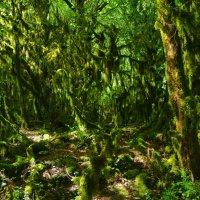 В заколдованном лесу. :: Ирина Нафаня