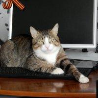 Кот и компьютер :: Виктор Орлов
