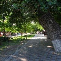 В парке :: Татьяна Миронова