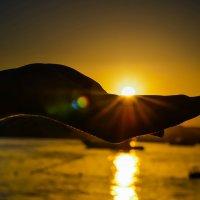 Солнце на ладони) :: Ксения Базарова