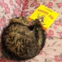 О пользе чтения перед сном :: Алексей Кошелев