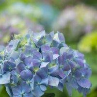 Цветок :: Юрий Ващенко