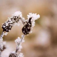 зима пришла :: Marina Marina