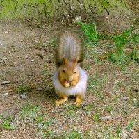 Белка песенки поёт, да орешки всё грызёт :-) :: Лия ☼