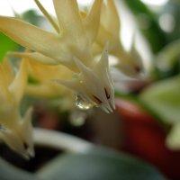 Каждый цветок - особое чудо :: Надежда Ч