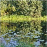 Тихая речка :: lady v.ekaterina