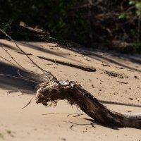 Речной змей... :: Александр Тарута