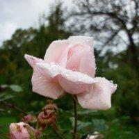 осенью после дождя :: Oxi --
