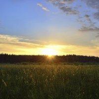 Закат позолотил поля и травы :: МарШева ♥Just Mary♥ .