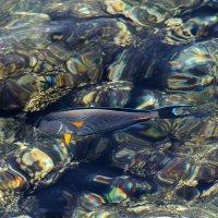рыбки... :: Алиса Колпакова