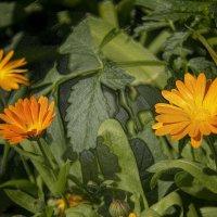 цветы .. :: Александр Абакумов