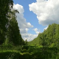 Дорога к озеру :: Владимир Гилясев