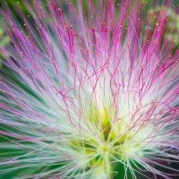 цветок :: Sergey Bagach