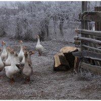 Рождественское утро :: Ясения Вальковская