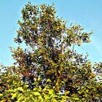 дерево :: Татьяна Королёва